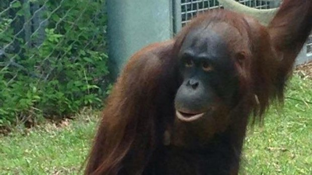 falske bryster Odense Zoo