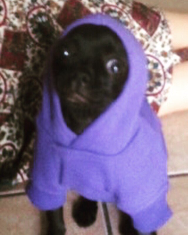 Caption this.......... #Rocco #mylilman #hoodie #chi https://t.co/4tNPUJf2hl