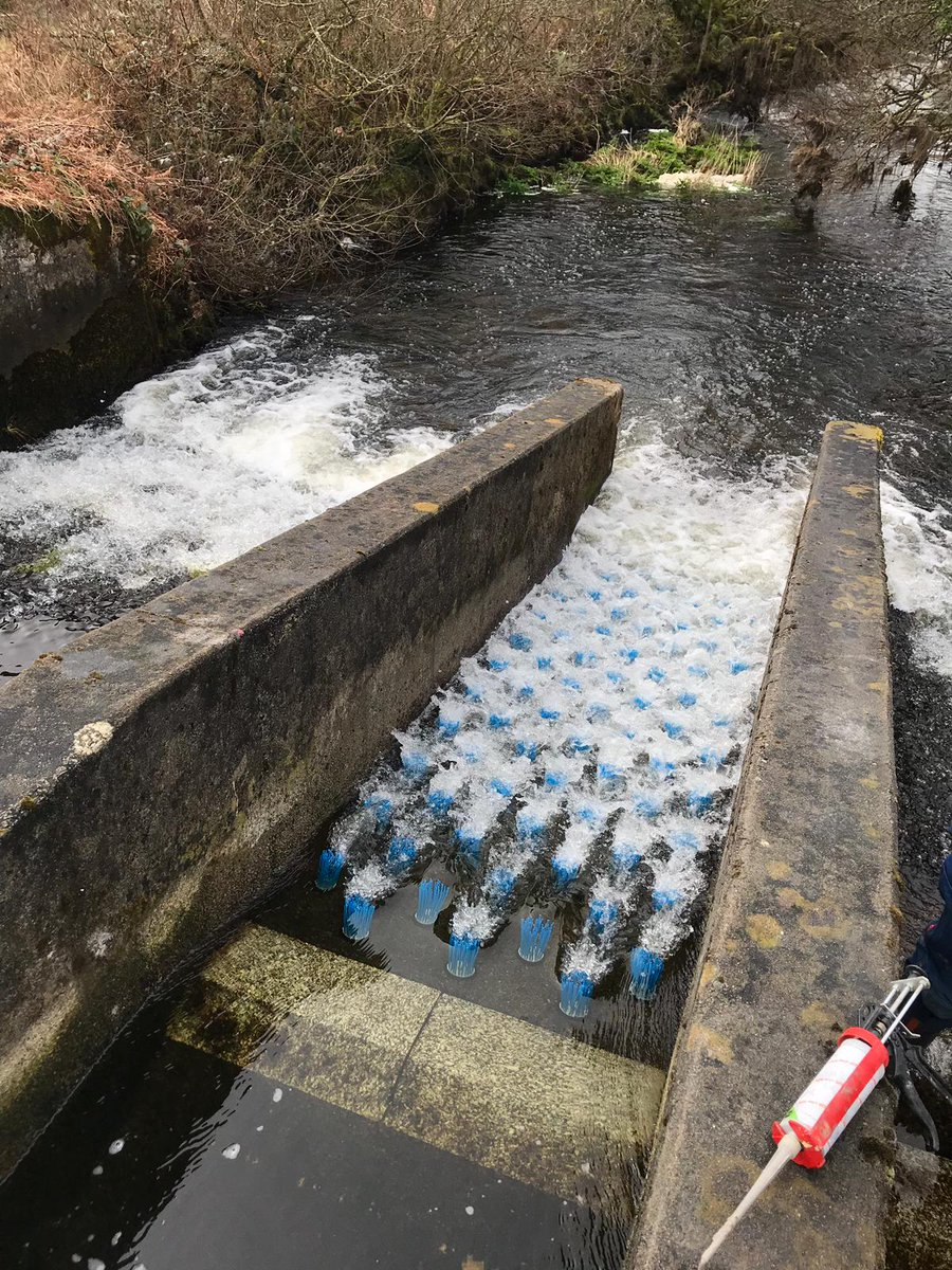 test Twitter Media - Fish brush installed on the De Lank near Bodmin. This is part of the  work being conducted by Daniella Montali-Ashworth and the Environment  Agency. Daniella is one of our @CDTSIS and @UoS_ICER students now working for the Environment Agency. https://t.co/7yxXuwYLzi
