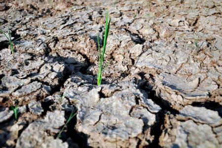 Siembra de arroz de mayo peligra por falta de agua en elCibao https://t.co/FrcufOjcwJ https://t.co/qoA3Z97UC6