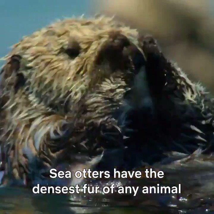 RT @ourplanet: Sea otters know a thing or two about self care. https://t.co/jTnSECkadr