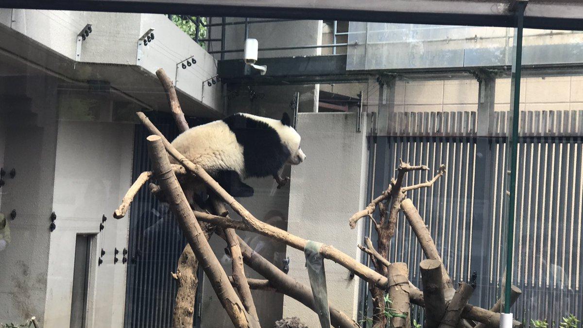 test ツイッターメディア - 今日のシャンシャン🐼💤 #上野動物園 #シャンシャン https://t.co/4EcsvI46DT