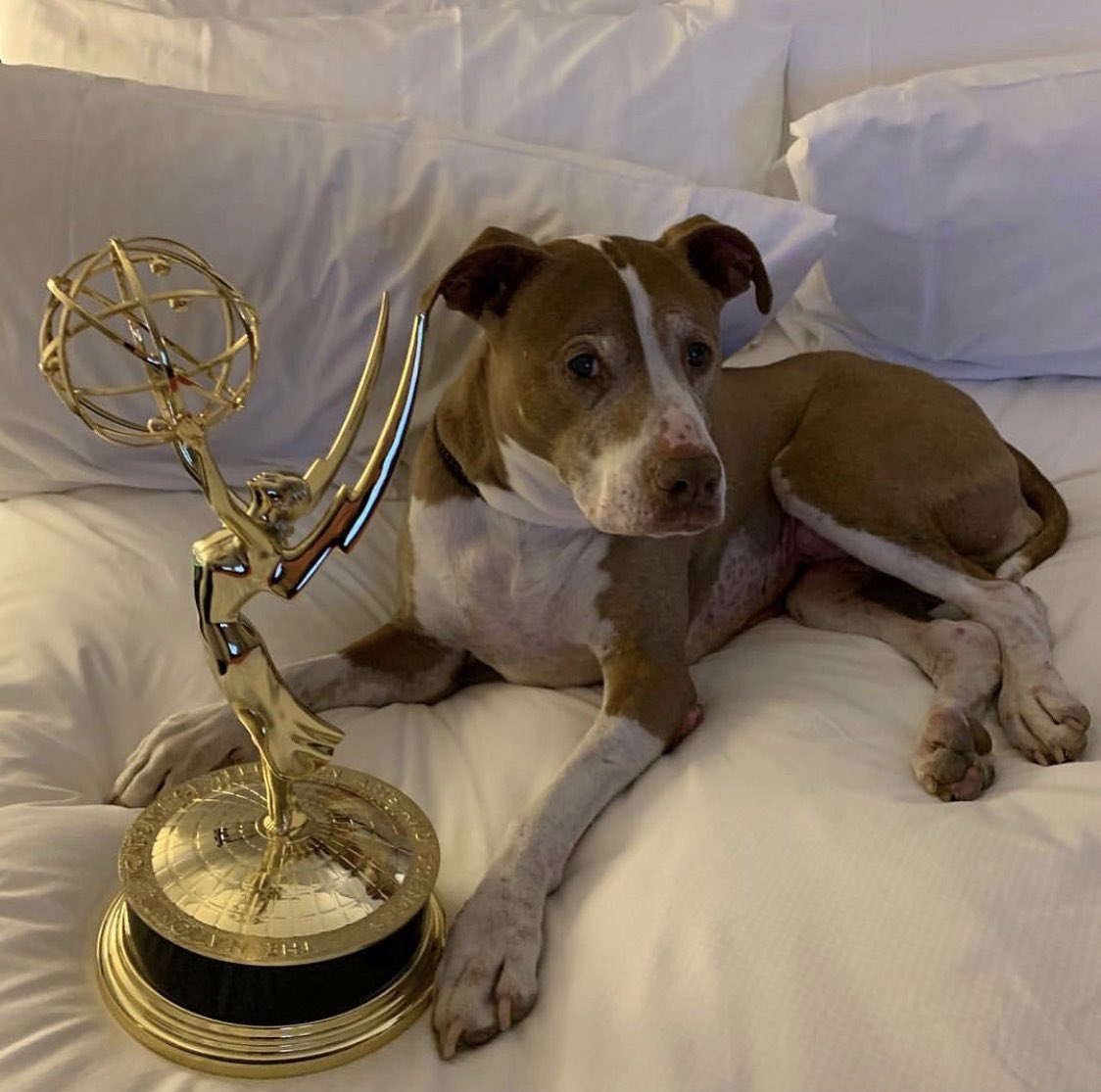 RT @rachaelray: Izzy and Emmy #rachaelrayshow #Emmys https://t.co/dM3OOJqg6u