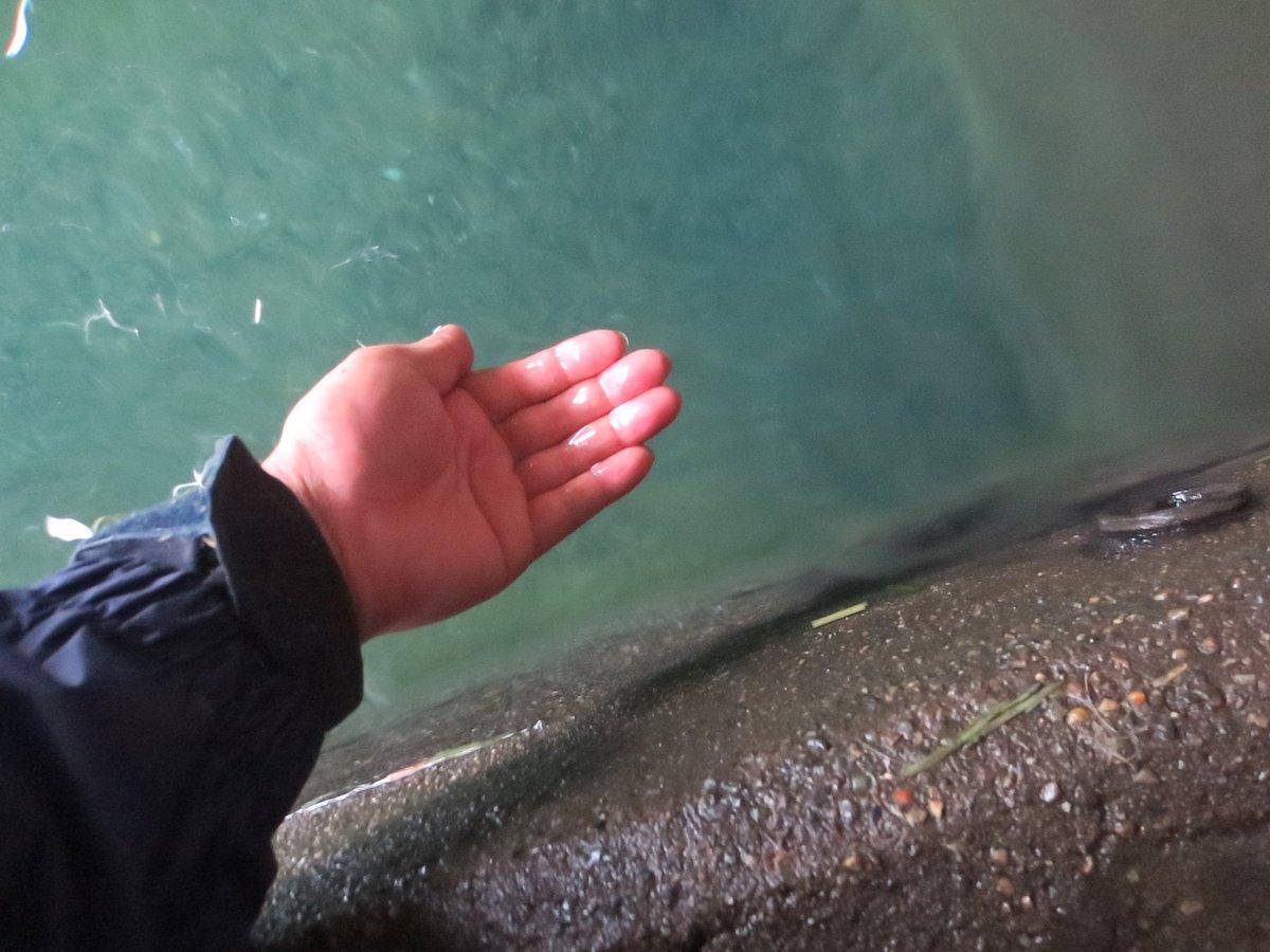 test ツイッターメディア - あ~ぁ喉乾いた...カバ水飲むか!(色々とアカン)  飼育体験のカバ舎にて #東武動物公園 https://t.co/y3IEG981dZ