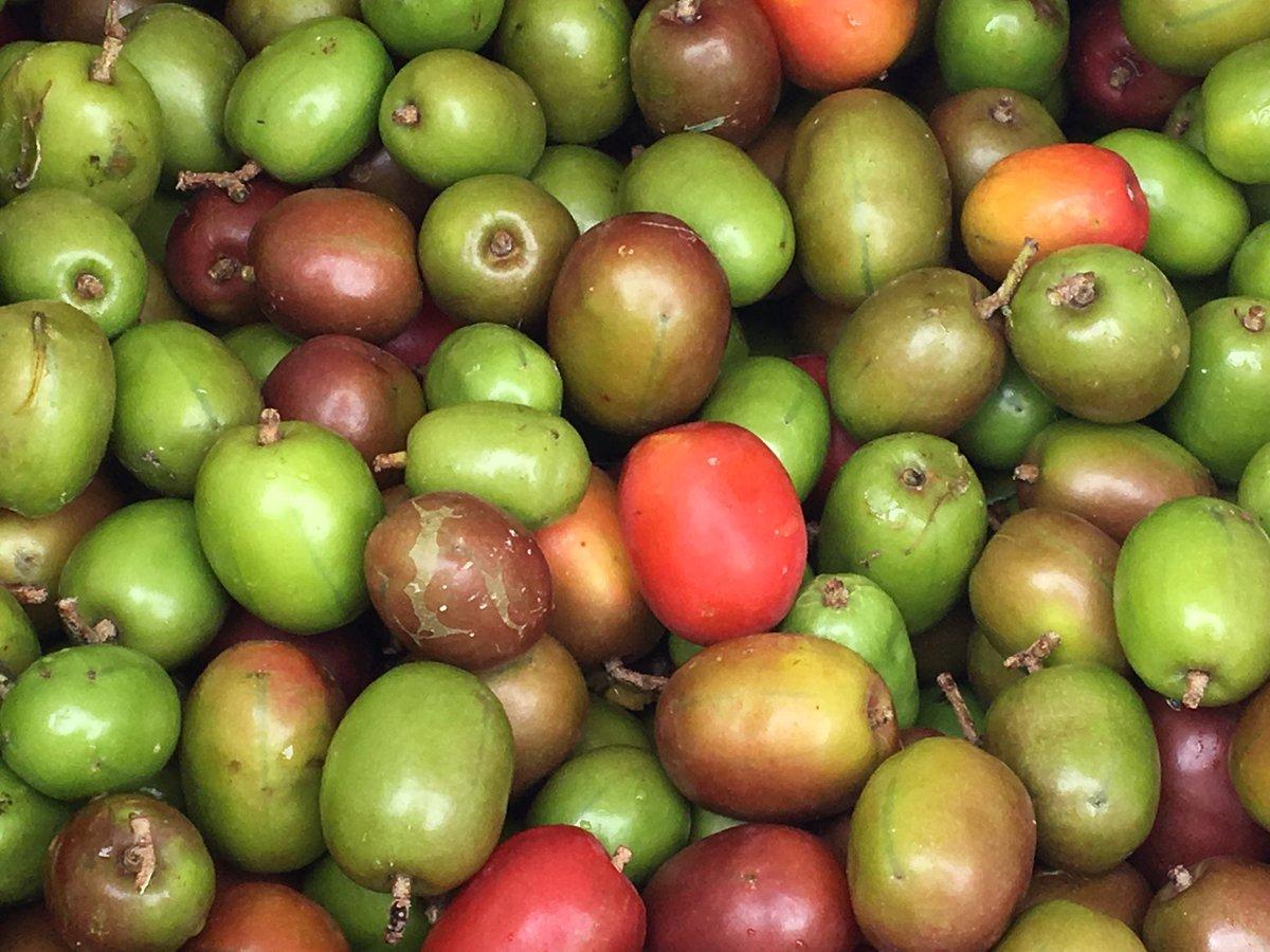 test Twitter Media - Plums are in season.  #Belize #organic #plums https://t.co/kRschOZUaO