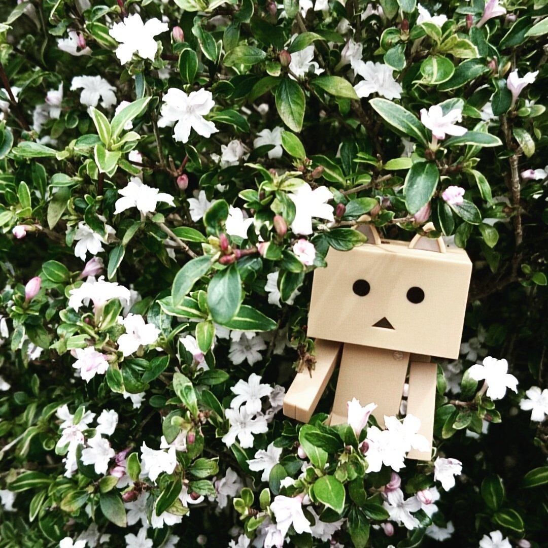 今日は良いお天気だったにゃ!#ダンボー#ニャンボー#にゃんぼー#ダボニャ#花#flower#danbo#nyanbo#d