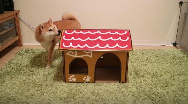 test ツイッターメディア - ふわふわふわもこな柴犬だいふく君が好きなのは、おもちゃ・お散歩・お姉さん - ねとらぼ https://t.co/8XR6skogGc @itm_nlab https://t.co/eUrtA6fORl