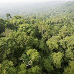 Environmentalists Urge Brazil's President Not to Roll Back Amazon Protection