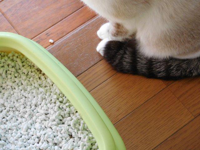 test ツイッターメディア - トイレ砂をザラザラと入れていると、猫ちゃんがやって来て少しだけおしっこしていくことってありませんか? あれって、人間が流水音とか水のせせらぎを聞いていてトイレに行きたくなるのと同じかなと思ってますw https://t.co/ZiYBtq4vzw