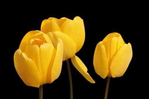 test Twitter Media - Tulips #EllenRothAuthor https://t.co/VGsaQkndrX