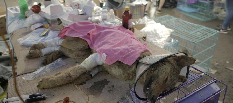 Rescatan a 1.000 perros y gatos cuya carne se iba a servir en el festival Yulin de China