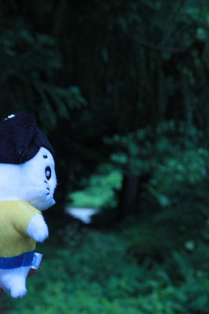 アシベになりたいゴマちゃんの大冒険٩( 'ω' )و#ゴマちゃん #ゴマ撮り #ぬい撮り