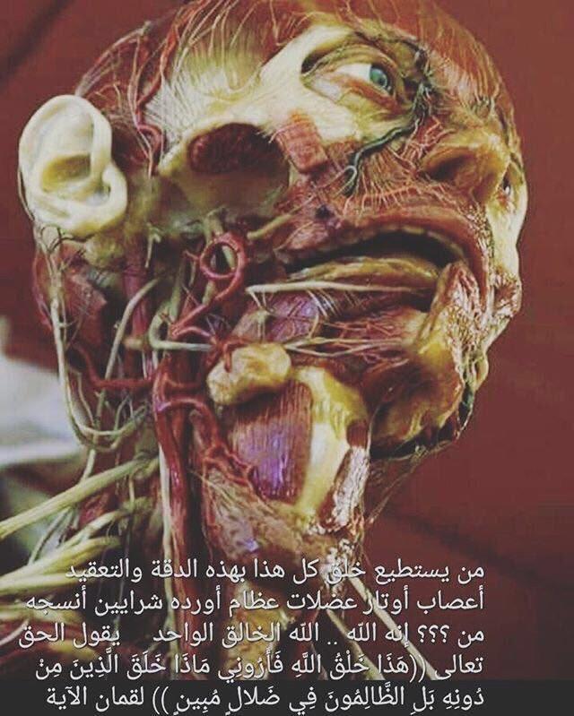 من يستطيع خلق كل هذا بهذه الدقه والتعقيد اعصاب اوتار عضلات عظام اورده انسجه #سبحان_الخالق https://t.co/3C1heyMw0y
