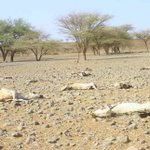 Six counties to face severe food shortage, malnutrition