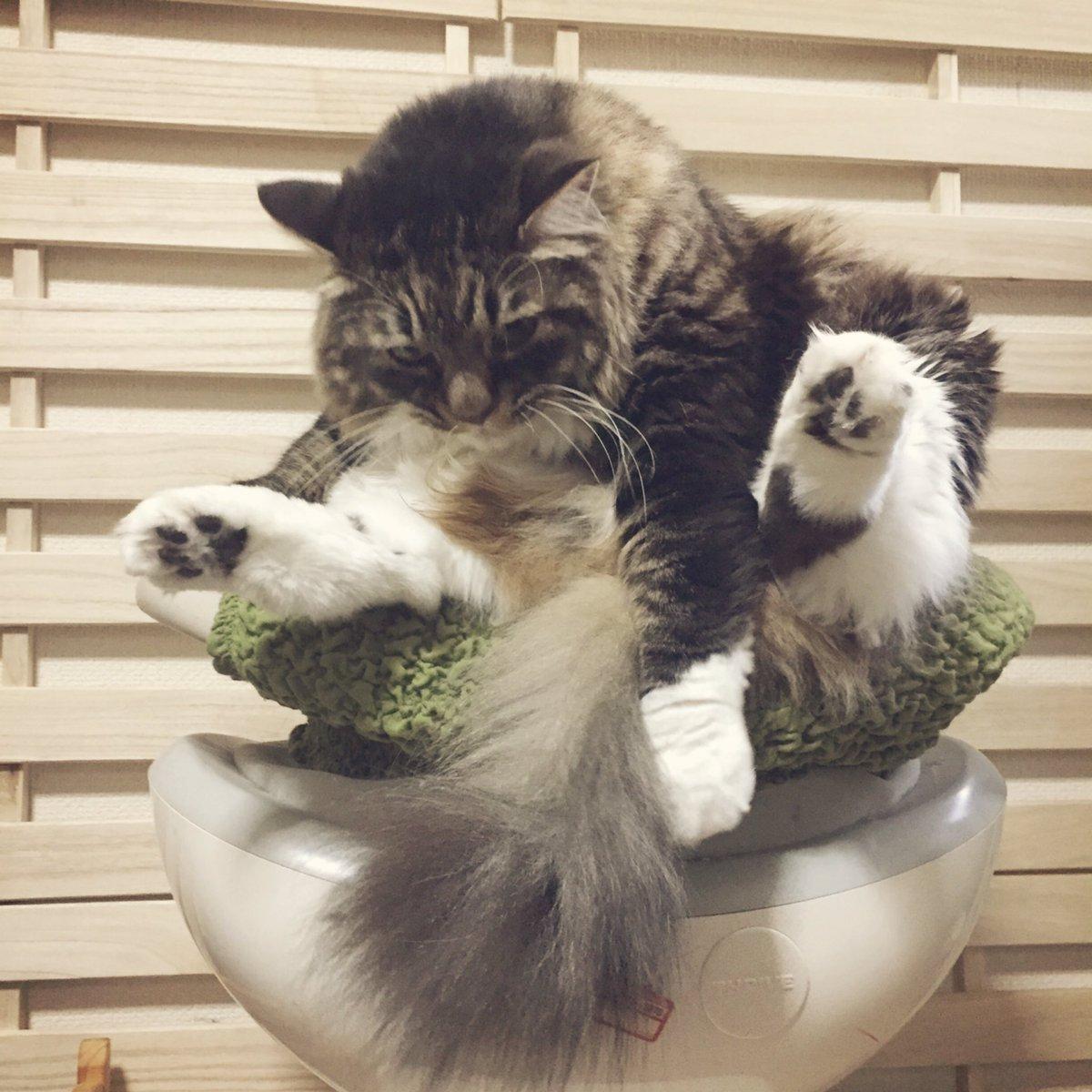 わけわかんない座り方してる松太郎、好き