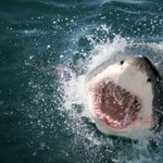 Teenager's miracle escape from Great White shark attack