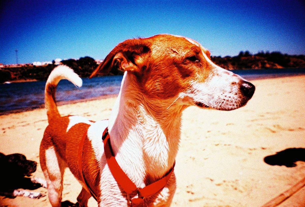 【溶けそうに暑い日々は La Sardinaで切り取ろう!】英語で「Dog Days」とは真夏の一番暑い日々のこと。写真