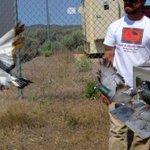 Exposure to oil sends birds off course
