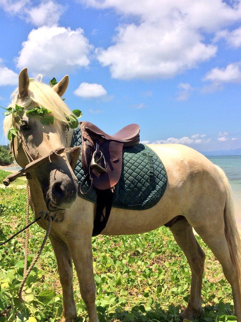 のんびりマイペースなハヤテ、ビーチで大好きな草をムシャムシャ・・・・ん!?頭の周りにキレ〜〜イに草冠が!!👑笑ちなみにス