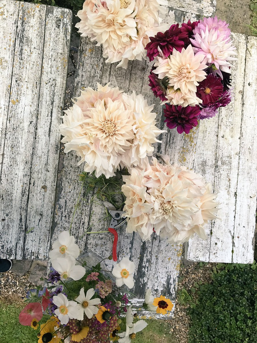 Dahlias for Days!!! In my Garden ???? https://t.co/NVR2BA3TM4