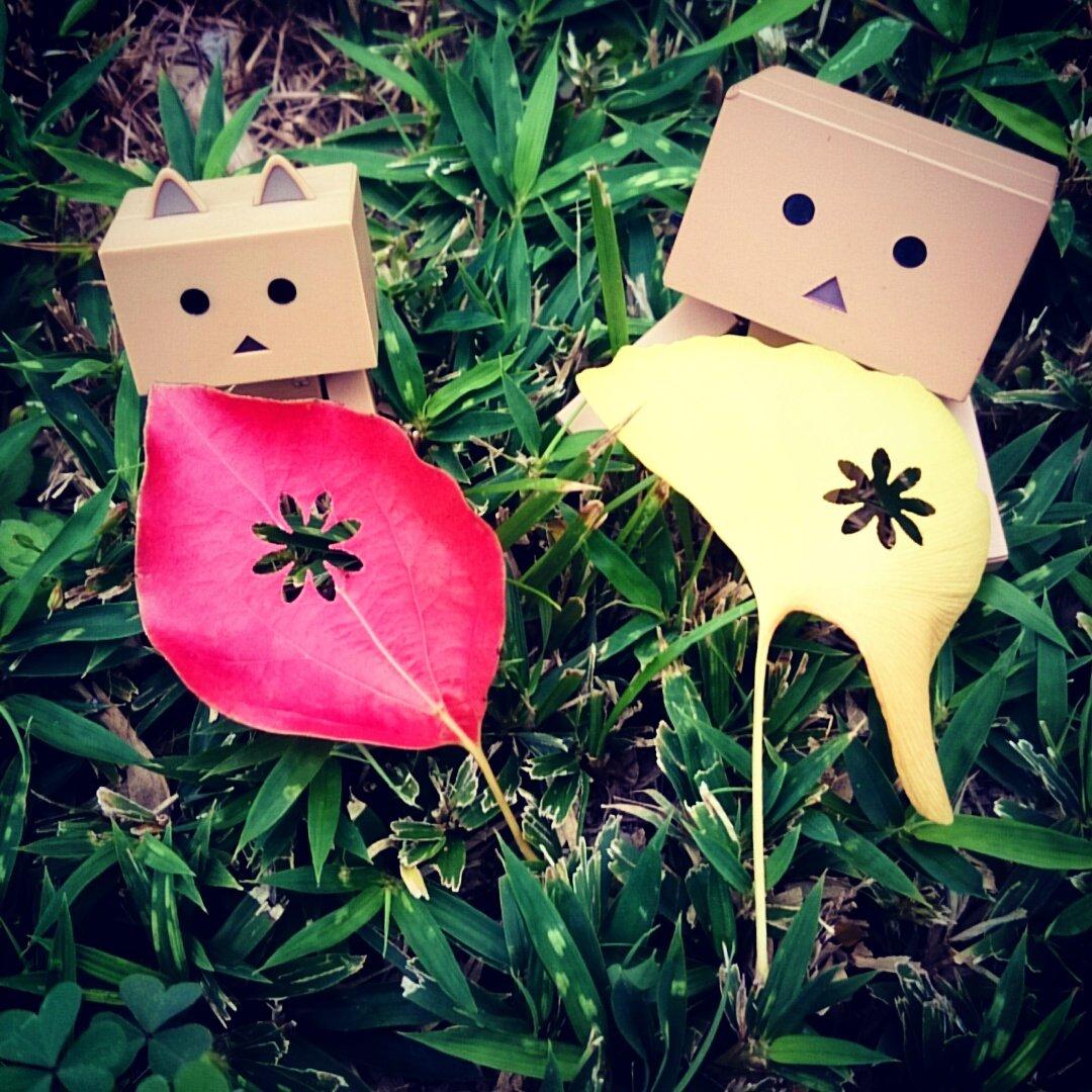 落ち葉にイタズラ🍂ごめんにゃさい🐾#ダンボー#ニャンボー#にゃんぼー