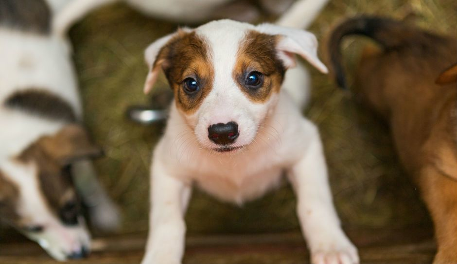 Pet Store Puppies Linked To Bacterial Outbreak In 7 States — Know The Symptoms And How To Prevent Infection