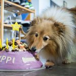 Birthday cakes for pooches prove a hit