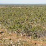 'Inexplicable': Huge surge in landclearing not picked up in emissions data
