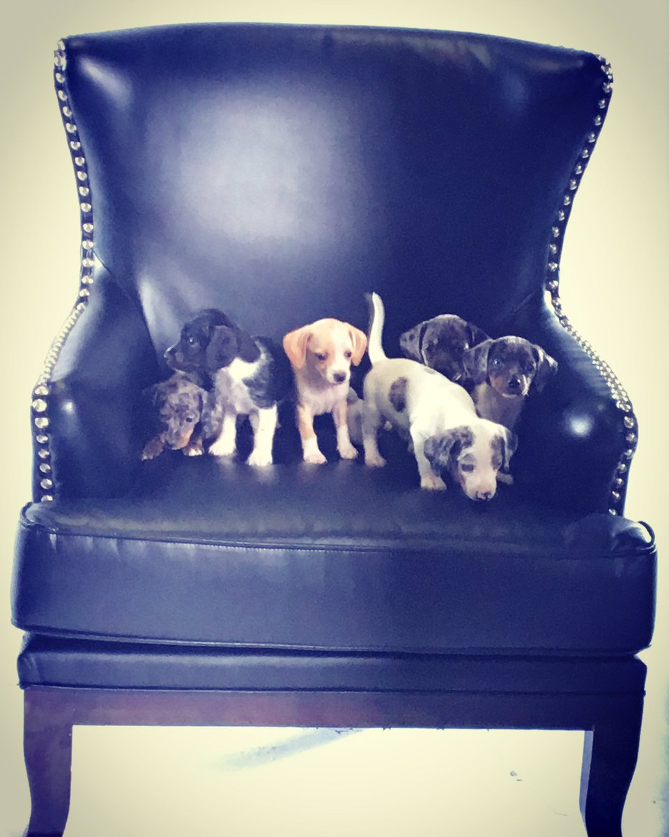 RT @MSEFndn: Keeping this chair warm for the @capitals @Holts170 #CapsCanineCalendar #Puppies https://t.co/4v5AuIruXe