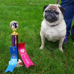 Seen@ 10th Annual Yappy Valley Dog Show in Easthampton