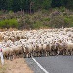 Farmers decry stock on roads bylaw