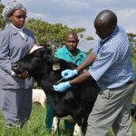 How to control foot and mouth disease
