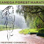 Malinga among 800 athletes registered in Kakamega Forest marathon