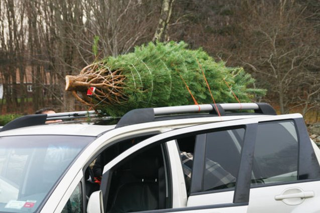 How to Transport Your Christmas Tree Safely by Car