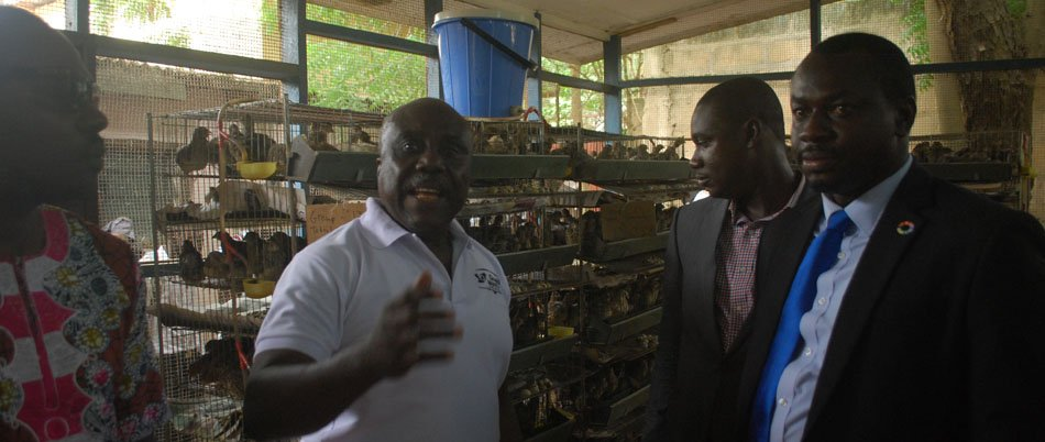 Quail Farming Introduced To Ghanaian Youth