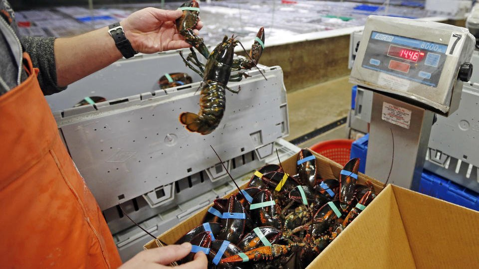 Christmas tail: Europe deal could slow yuletide lobster biz