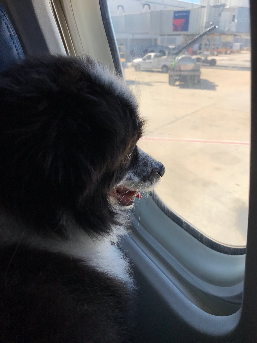 test Twitter Media - When Finn flies on @Delta I talk to the res agent in advance to confirm all rules. I voluntarily bring all  documentation and his picture ID as a registered @pet_partners therapy pet. @pet _partners has the most rigorous standards. As you can see he does very well! Thanks @Delta https://t.co/LAnEsAHM2n
