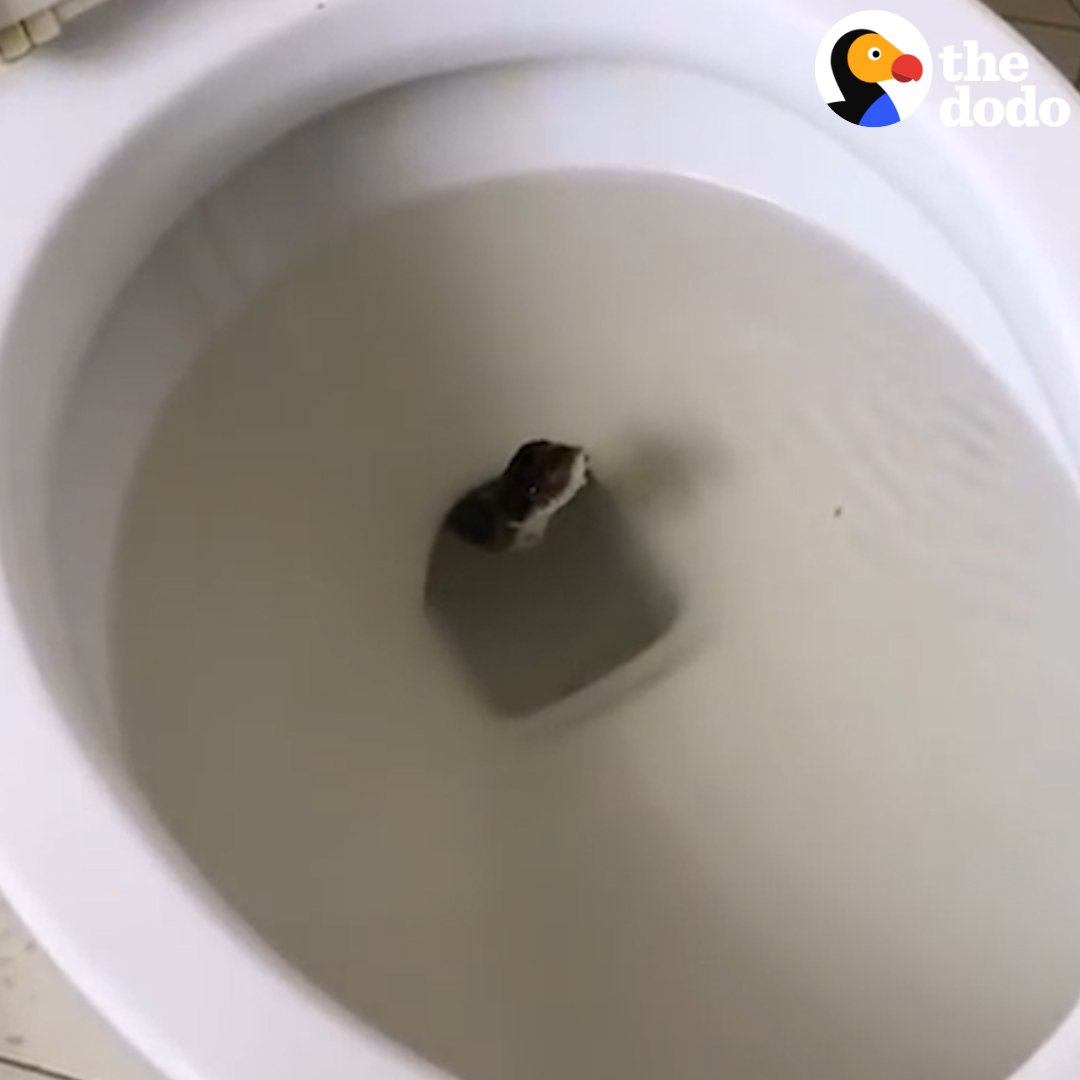These people found a GIANT SNAKE IN THE TOILET, aka our worst nightmare �� https://t.co/G0l9hwxKSz