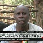Foot and mouth disease breaks out in Nakuru