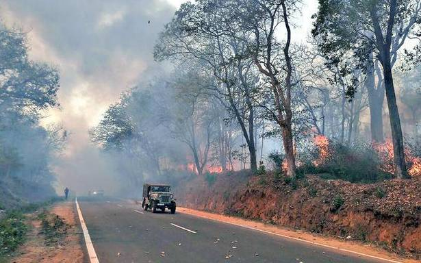 Forest fires on the horizon as dry season sets in