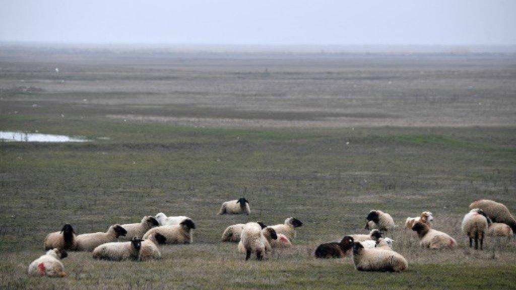 Setback for Romanian farmer's bid to graze sheep near NATO base