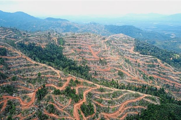 'Stop all illegal logging'  - Nation