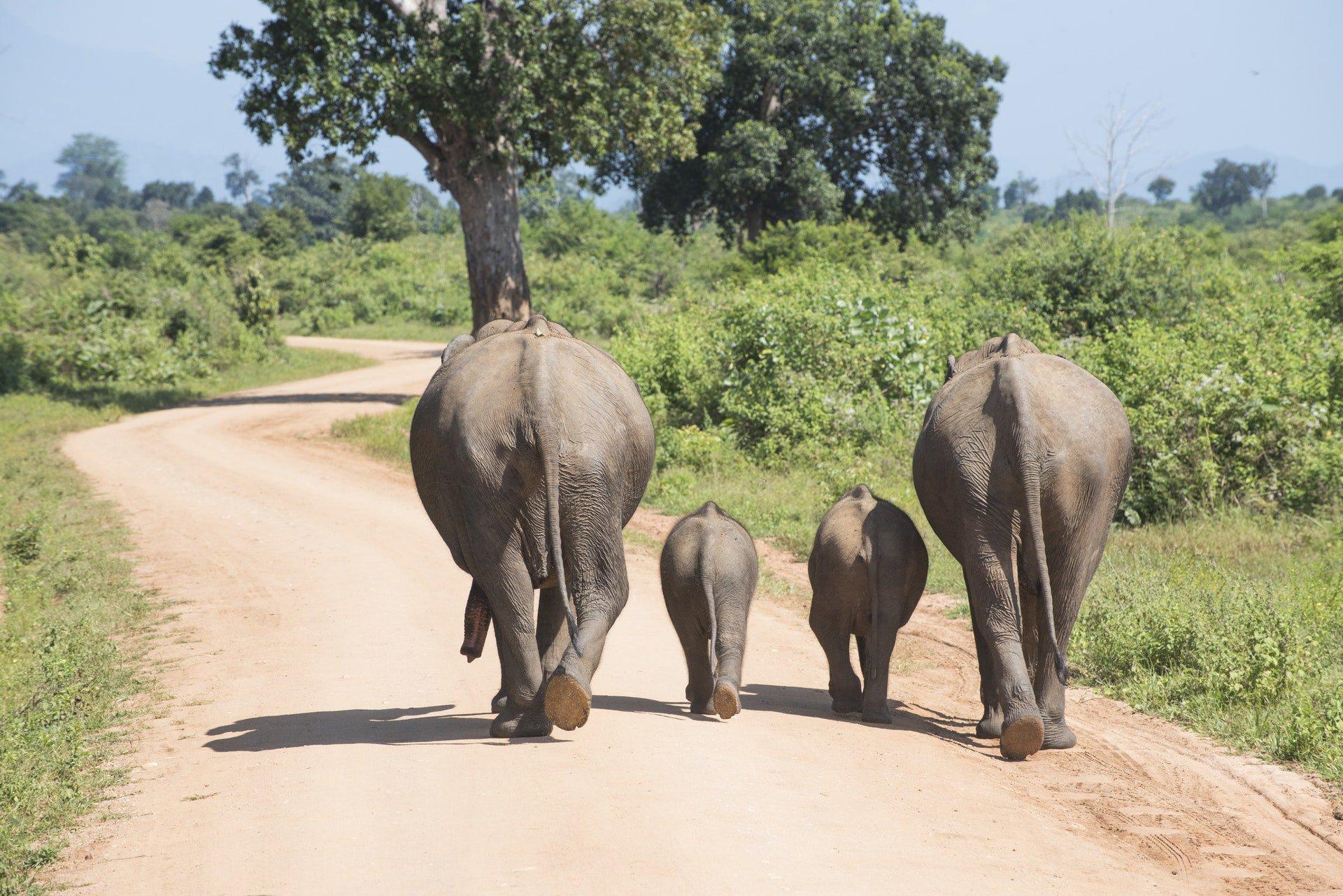 Elephants have three times as many brain cells as humans. https://t.co/b0cz2B6xWR