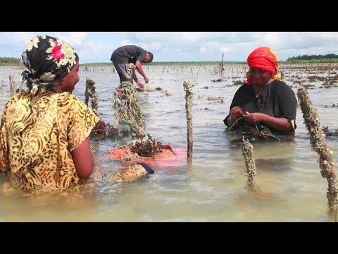 Climate change eroding women's status in Zanzibar