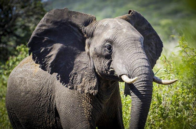 the next premier wildlife destination?