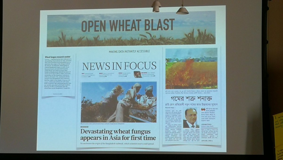 test Twitter Media - #RFBellagio Wheat blast pandemic tackled with field collections to genome analysis in 6 weeks @KamounLab caused by S American introduction. Spread from Bangladesh into India and still on the move @IITA_CGIAR @CIAT @wheatblast https://t.co/0Um0h7wZNz