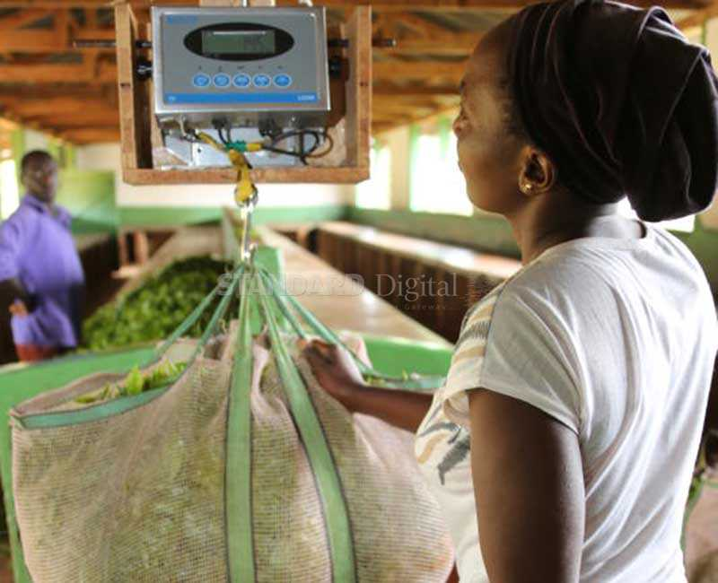 Tea companies in trouble over fraudulent weighing and measuring scales