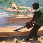 MPs urge Uhuru to ban logging and declare it national disaster