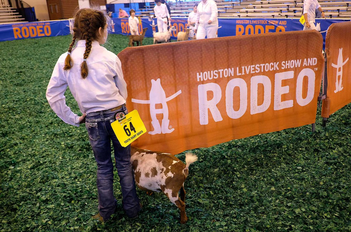 Lamb, goat break world records at Rodeo Houston
