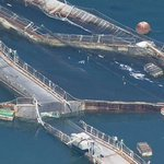 WA Legislature votes to phase out Atlantic salmon farming